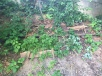 Erdbeerwald gibt Gas